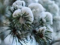 snow 1912206 640SMALL