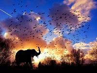 elephant 3117217 640