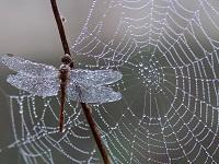 cobweb small